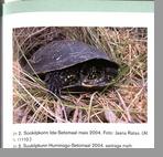Kiristaja Arvis  Болотная черепаха в Сетумаа